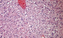 Anatomical Pathology